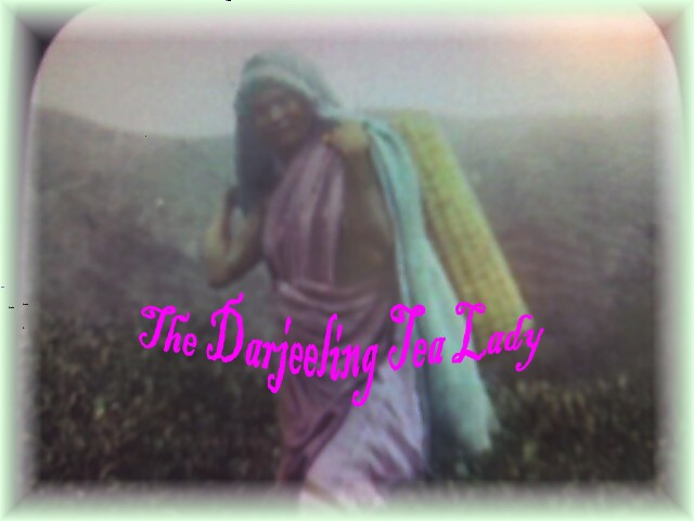 The Darjeeling Tea Lady